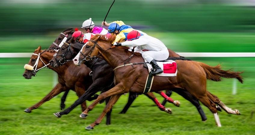Apostas online corridas cavalos